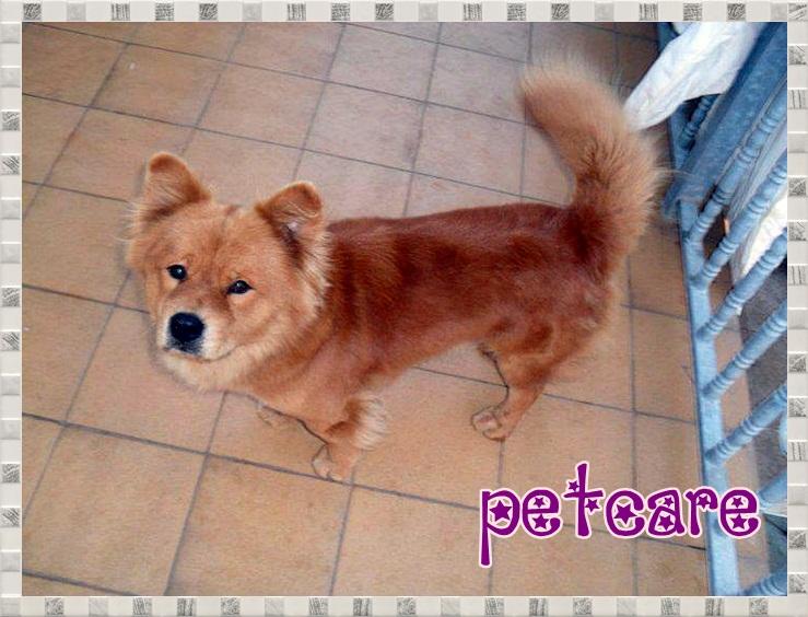 Animales en Adopcion (Coruña) 7789103_orig